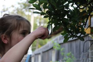 Looking at the tree leaves.