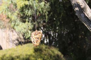 Our new bird feeder hanging in a tree.